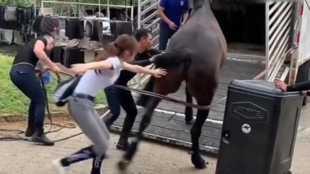 美女心可真大,得亏老马没往后踢,不然就惨了