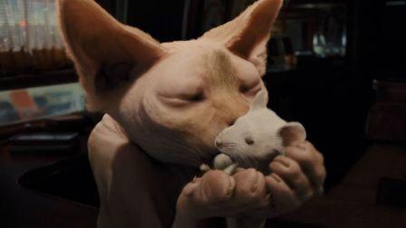 小猫咪被主人抛弃后,学着人类养老鼠当宠物,