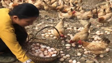 农村美女大学毕业在家创业,养了几万只老母鸡