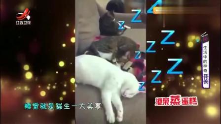 家庭幽默录像:喵星人装睡不理主人,一听猫粮