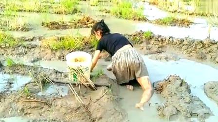 为了抓鱼,美女都不怕弄脏衣服,穿着裙子就摸