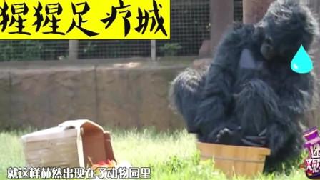 """幽默观察家:当不正经的""""猩猩""""遇到3个围观老"""