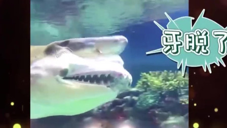 家庭幽默录像:原来不止人有假牙,没想到动物
