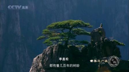 太极拳加长纯音乐《潺潺流水》三明市橄榄树秋