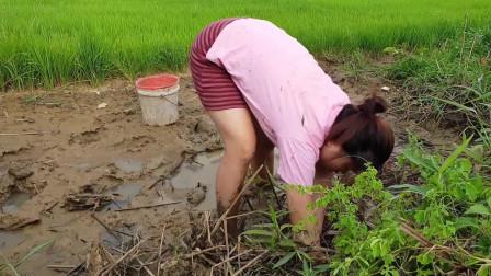 农村单身美女到户外打野,挖一个洞得一只螃蟹