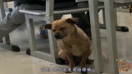 搞笑动物配音:怎么又是英语课啊,下课铃声还