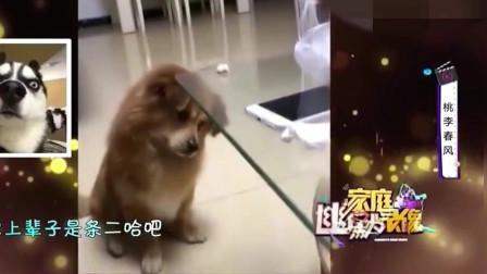 家庭幽默录像:不是所以有狗狗都很聪明的,看