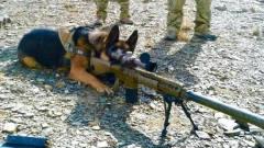 训练有素的德国牧羊犬,军事行动少不了它们的