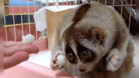 【搞笑视频】小*猫翻过玻璃墙,也要找小狗玩