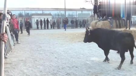 西班牙的斗牛到底有多凶猛?看完这个视频你就