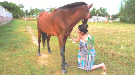 小姐姐带马而出来互动,美女一直在抚摸马