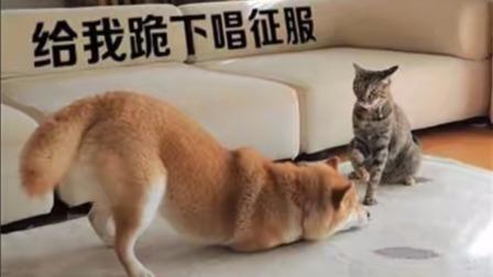 方言配音,动物搞笑视频合集,笑到肚子疼