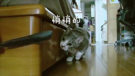 萌猫各种搞笑视频第二集,看完我笑了一整天,