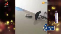 家庭幽默录像:当猫遇到扫地机器人会作何反应