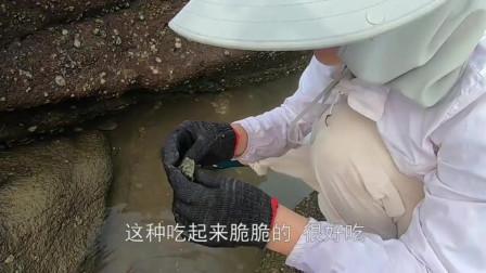 """无人岛的新物种不多见,碰巧遇到爬行的""""土龟"""