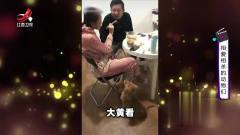 家庭幽默录像:为了训好自家狗狗,这家男主人