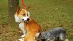 主人的一次恶搞,估计你家狗以后很难找对象了