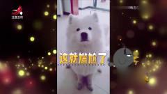 家庭幽默录像:过狗年掌握一门汪语是很重要的