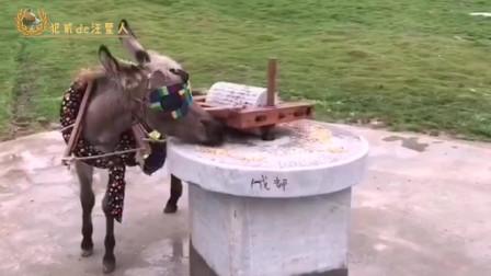 搞笑视频:现在的老板太抠门,本驴自己动嘴了