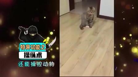 家庭幽默录像:猫咪很高冷,不听话?那是你没