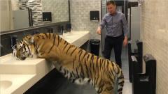 男子厕所偶遇老虎,以为是恶搞,从身下爬过时