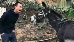 搞笑视频:不服驴就服你,学驴我忍了,学猩猩