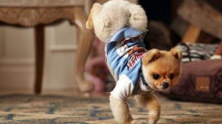 村里唯一去过夜店的狗,当音乐响起时,狗子身