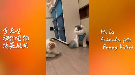 搞笑动物视频来袭