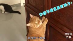 搞笑四川方言动物配音:别误会,我怀疑柜子里