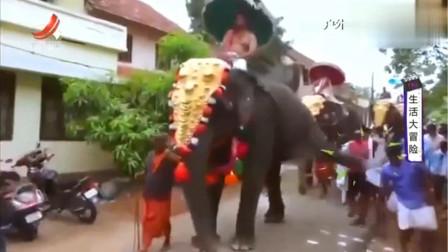 家庭幽默录像:兄弟还好吗?大象这一脚威力够