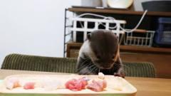 主人端来一盘鱼肉,水獭看到后反应好搞笑,真