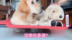 搞笑短片:动物过假期,有些狗狗是留守陪主派
