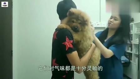 搞笑视频:狗狗去打疫苗,还没扎到就开始叫,