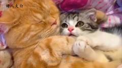 诗人大白搞笑视频:小猫咪秀恩爱,狗子看了好
