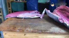 日本街头美食,大厨现场分解蓝鳍金枪鱼,切开