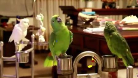 幽默观察家:动物也疯狂!这些鹦鹉不但会说话