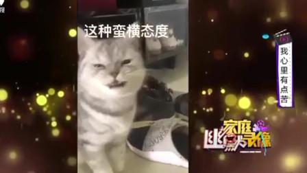 家庭幽默录像:猫:你以为你哭诉两下,我态度