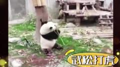 家庭幽默录像:会打醉拳的大熊吗,你见过吗?