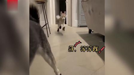 #2019搞笑动物合集#拯救你的不开心