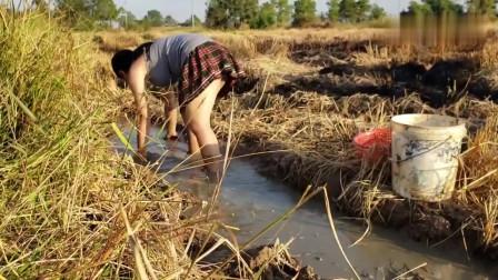 农村美女听说稻田里有鱼,赶忙提着桶子来抓,