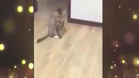 家庭幽默录像:想要猫猫听话帮你关灯?只需一