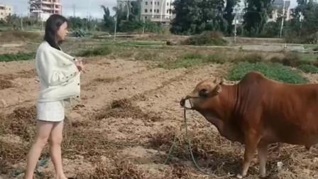 美女你这个样子老牛都不敢看了!