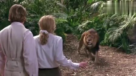 狮子眼看就要吃了美女,野人立马跳出来,这架