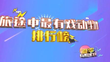 家庭幽默录像:传说中公鸡中的战斗机,它能连