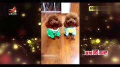 家庭幽默录像:你见过狗狗秀恩爱吗?看看这两