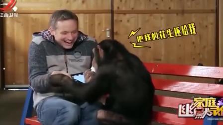 家庭幽默录像:贪吃的大猩猩只要你想要的,我