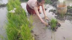 农村美女在田边搞野抓鱼,为了不弄脏裤子,还