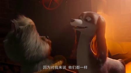 """女王的柯基:母狗""""跳钢管舞""""真美,几只公狗"""