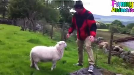 搞笑视频:这是找着对手了吗?