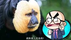 搞笑的唐唐:这动物比二哈还沙雕,想不到